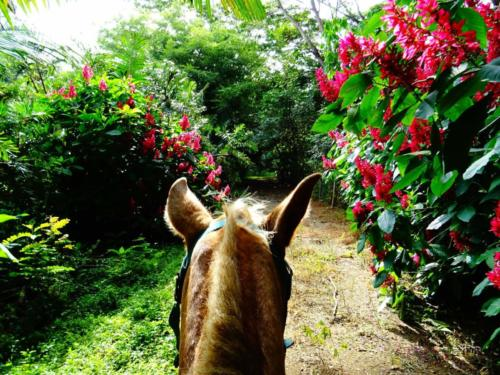 Horse Jungle flowers
