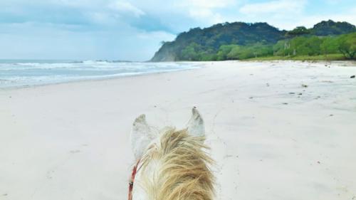 Randonnées à cheval plusieurs jours costa rica